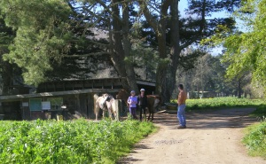 Horseback riders on Green Gulch Trail to Muir Beach